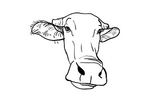 Drawing of buffalo head