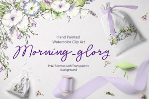 Watercolor flower – Morning glory