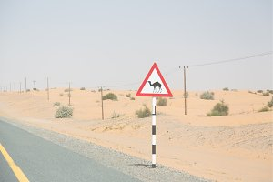 Beware Of Camels On Desert Highway