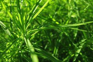 Summer sunny green grass plant macro