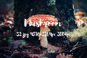 Mushroom photo pack II