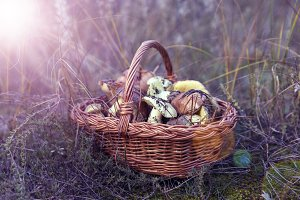 basket with forest edible mushrooms