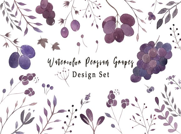Watercolor Persian Grapes