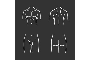 Male body parts chalk icons set