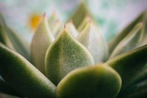 Macro of Green plant
