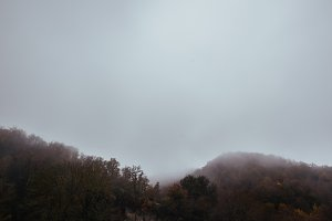 Forest between fog