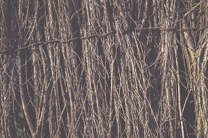 Branches fence, background