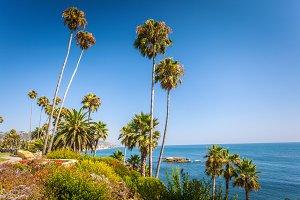 Tropical flora in Laguna Beach