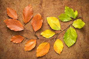 Autumn leaves from green to brown