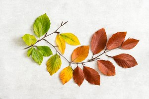 Autumn leafs from green to brown
