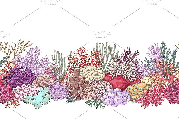 Life on Coral Reef in Illustrations - product preview 3