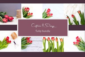 Spring Red Tulip Square Bundle