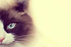 Blue-eyed & creamy