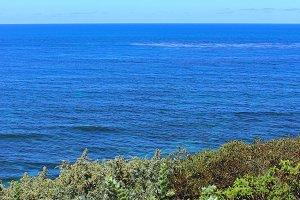 West Coast Garden View