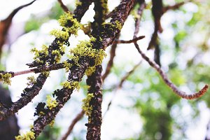 Lichen + Branch