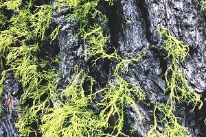 Lichen + Trunk