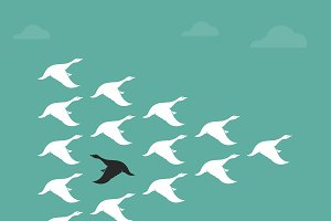 Flock of a duck flying in the sky.