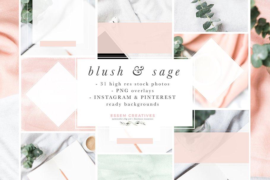 Blush Sage Stock Photo Social Bundle