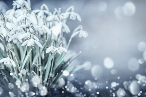 Snowdrops flowers card layout