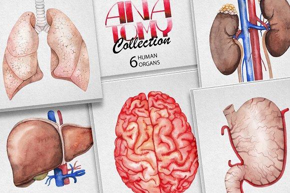 Watercolor Human Organs Illustrations Creative Market