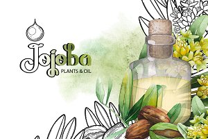 Graphic and watercolor jojoba plants