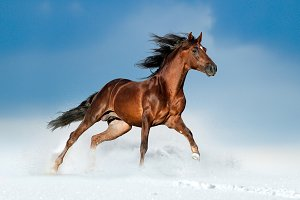 Andalusian horse in winter field