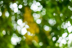 Beautiful blur background, bokeh on nature.
