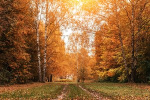 Beautiful autumn park. Foliage on green grass. Autumn day in the forest. Orange bright background.