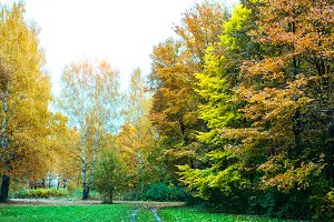 Beautiful autumn park. Foliage on the green grass. Autumn day in the forest. Green bright background.