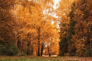 Beautiful autumn park. Foliage on the green grass. Autumn day in the forest. A saturated bright background. Many trees.