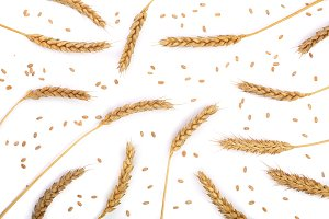 grain and ears of wheat isolated on white background. Top view. Flat lay pattern