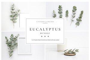 Eucalyptus bundle mockup