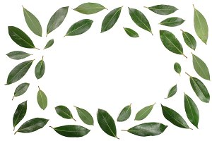 frame of laurel isolated on white background with copy space for your text. Fresh bay leaves. Top view. Flat lay pattern