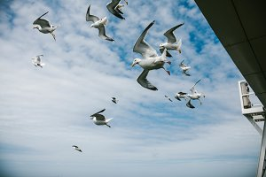 Seagulls in the sky close-up