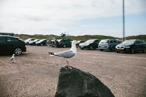 Seagull standing on stone