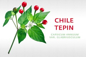 Chile tepin pepper