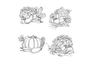 Vector sketch of vegetables or veggies harvest