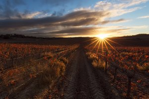 Sun spikes over a red vineyard in Es