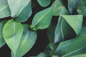 Tropical Leaves in Shades of Blue