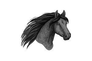 Horse animal muzzle vector sport sketch icon