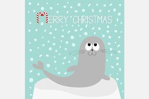 Merry Christmas Harp seal pup