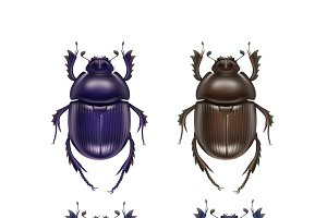 Set of scarab beetles