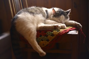 cat sleep on knitted tissue in country interior