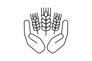 Open palms with wheat ears linear icon