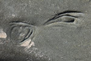 Eyes in the rock