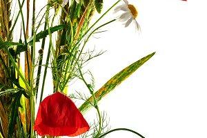 Wild flowers poppy bouquet