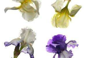 Collage of irises