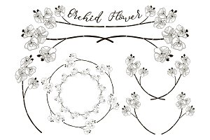 Vector Orchid Flower Design. Dividers, Frames and Wreaths