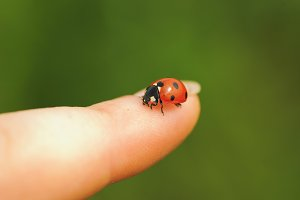 ladybird on finger