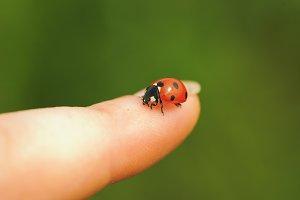 ladybird on finger